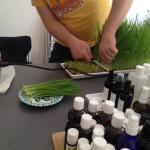 Weizengras Ernte